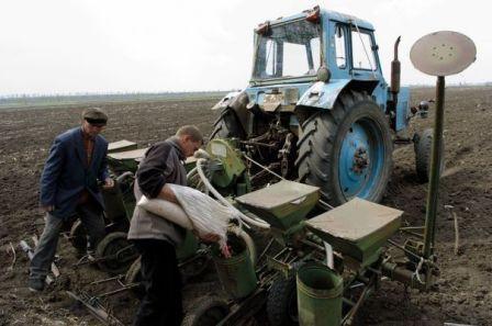 На рівненщині посіви гречки збільшать
