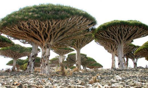 Сокотра, Ємен