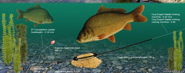прикорм рыбы для подводной охоты