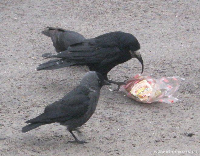 У рівному виявили птаха з аномальним
